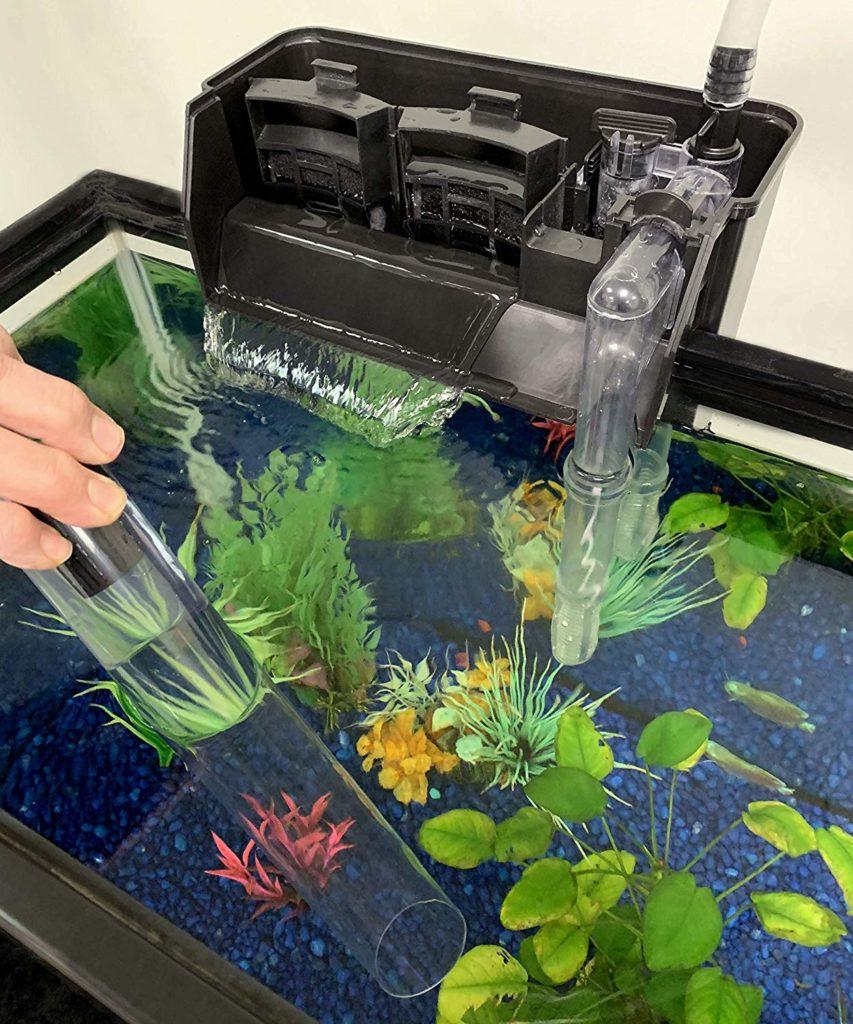 fish tank cycle