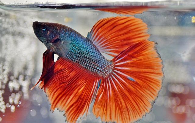 best fish tank 2020