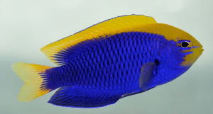 best aquariums