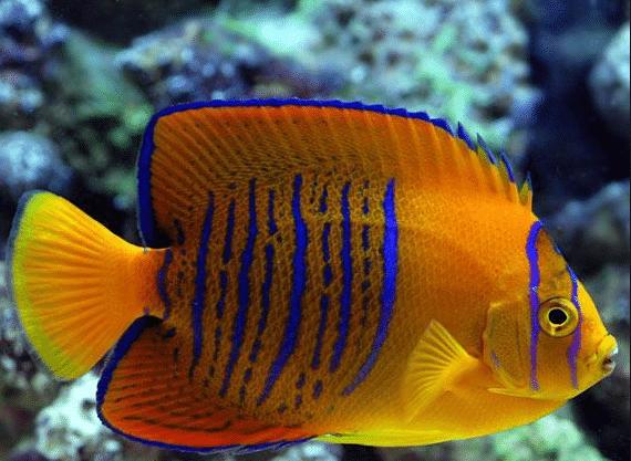 expensive fish for aquariums
