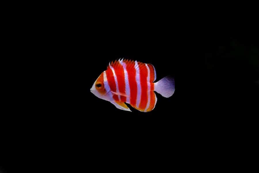 most expensive aquarium fish