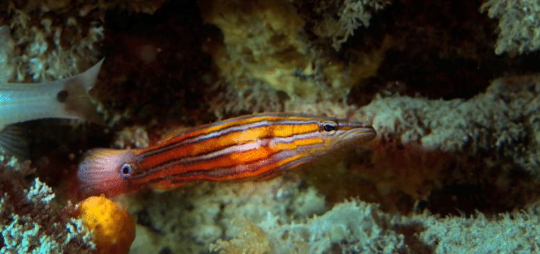 very expensive aquarium fish