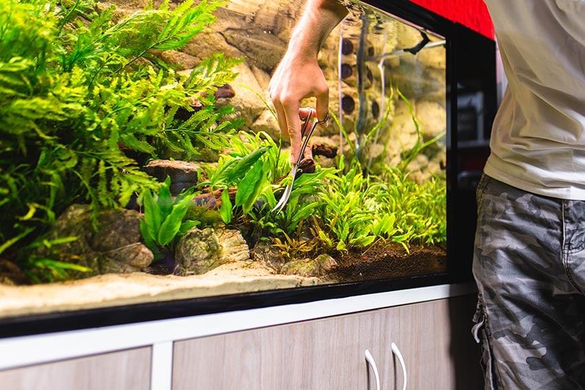 Adding Moss To an Aquarium