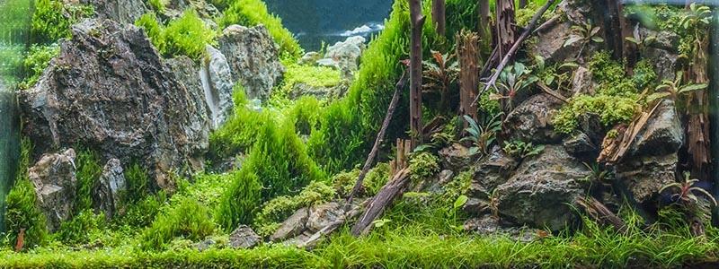Can moss grow underwater