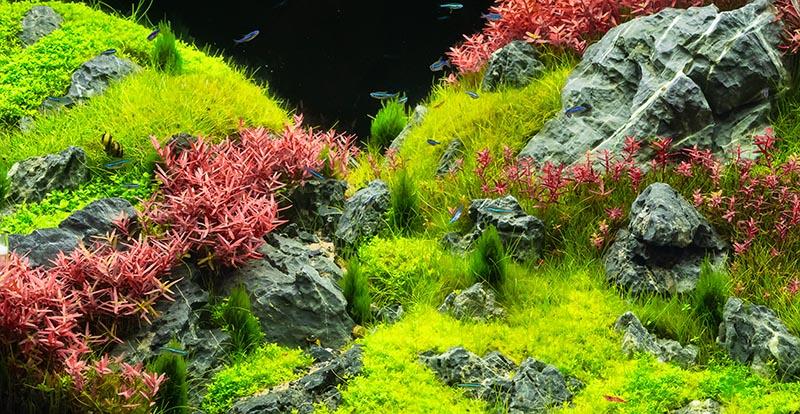 zen fish tank ornaments