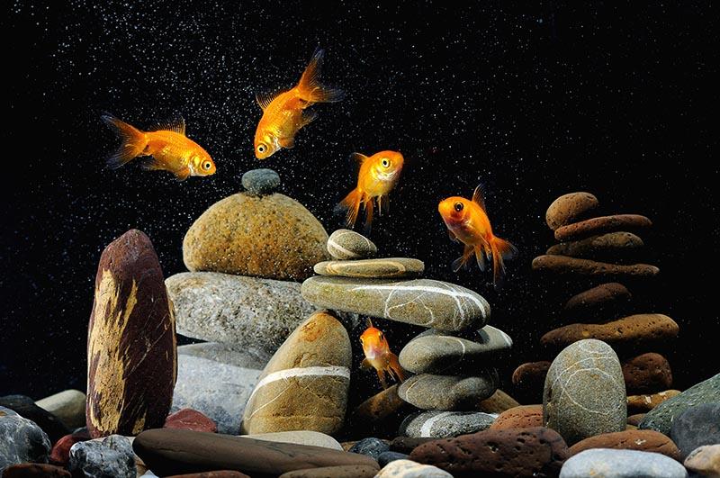 zen fish tank decorations