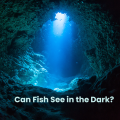 Can Fish See In The Dark?