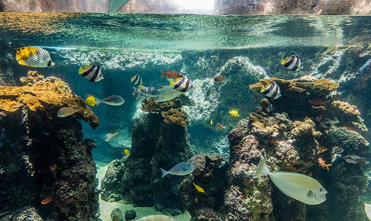 large aquarium rocks