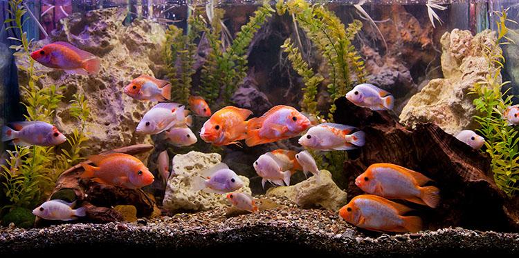 lava rock aquarium